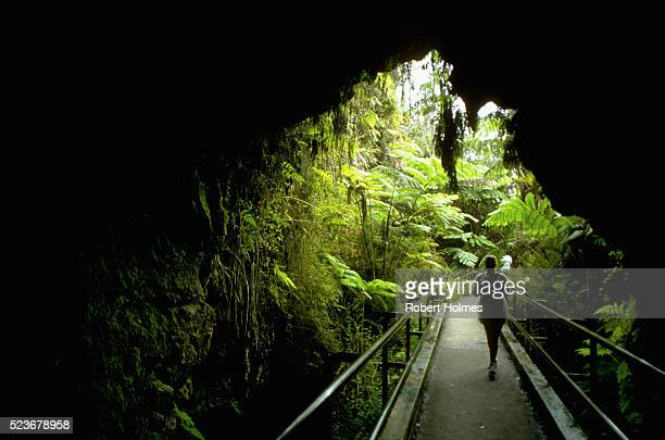 thurston lava tube - ハワイ火山国立公園 ストックフォトと画像