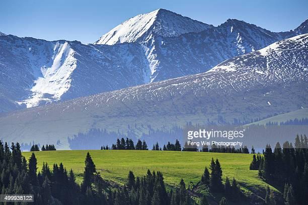 tian shan mountains, kalajun grassland, xinjiang china - tien shan mountains stock pictures, royalty-free photos & images