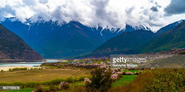 tibet 2018 - peach blossom stock pictures, royalty-free photos & images