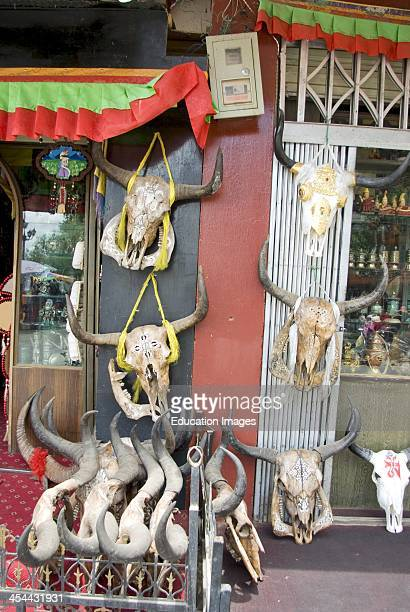 Tibet Lhasa the capital city Shop selling decorated yak skulls