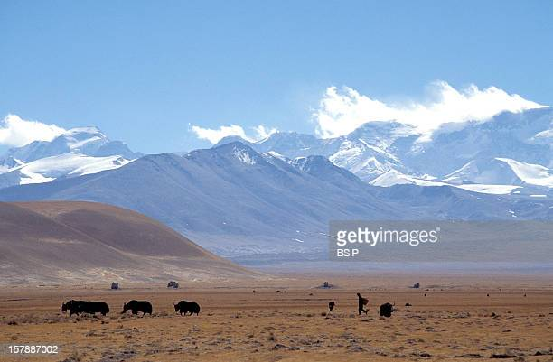 Tibet UTsang Winter Trekking At The Village Tingri Near The Southern Frontier Of Tibet And The Norther Frontier Of Nepal At The Monastery Rongbuk At...