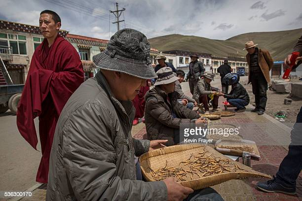 Tibetan buddhist monk walks past Chinese vendors selling cordycep fungus on May 20 2016 at a market in Sershul on the Tibetan Plateau in the Garze...