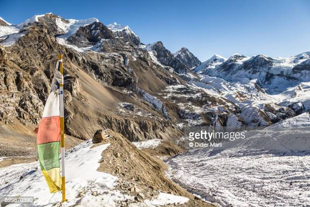 tibetan buddhist prayer flag on the way to the thorung la pass on the annapurna circuit in nepal - didier marti stock photos and pictures