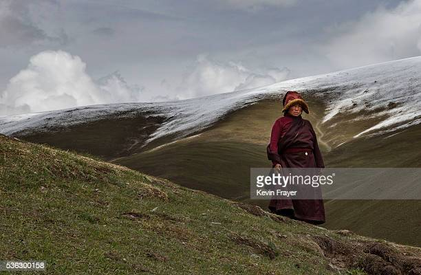 Tibetan nomad takes a break from harvesting cordycep fungus on the 15th day of Saka Dawa the holiest day of the Buddhist calendar on May 21 2016 at...