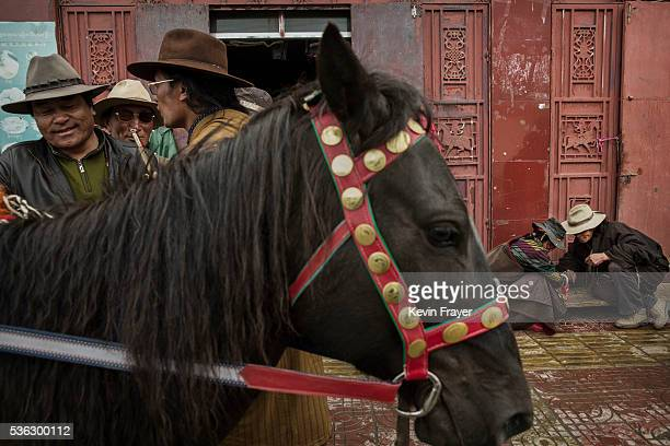 Tibetan nomads right check cordycep fungus as another tries to sell his horse on the 15th day of Saka Dawa the holiest day of the Buddhist calendar...