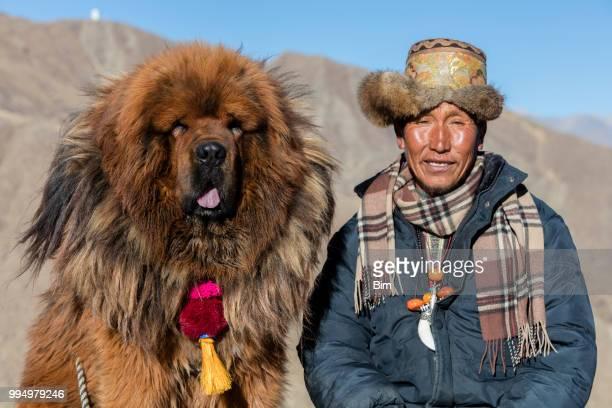 tibetaanse herder met zijn hond mastiff - tibet stockfoto's en -beelden