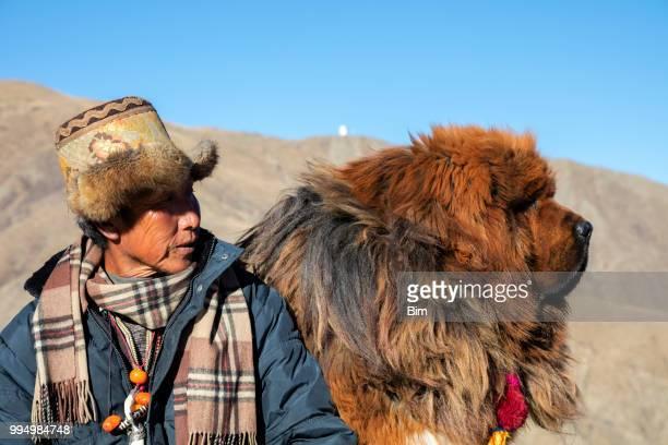 tibetaanse herder met zijn hond mastiff - himalaya stockfoto's en -beelden
