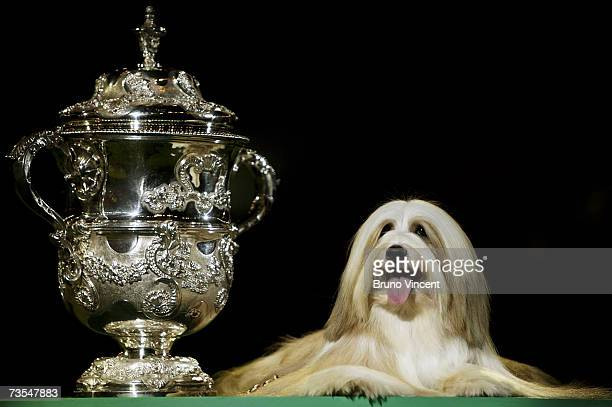 "Tibetan Terrier, Araki Fabulous Wiliy poses after being awarded the coveted ""Best In Show"" award at the end of Crufts International Dog Show 2007 at..."
