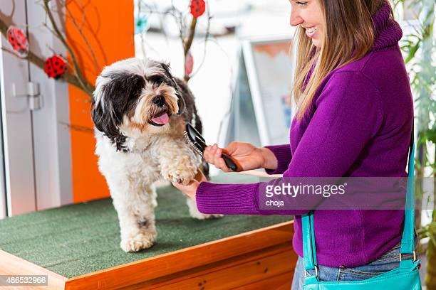 Terrier Tibetano em pet store.cute mulher proprietário é Pentear