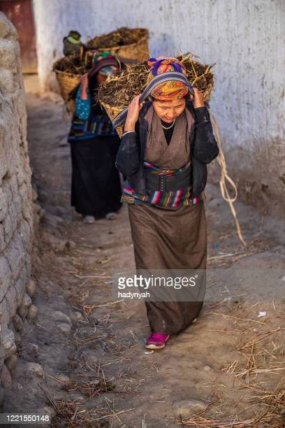 tibetan women carrying baskets of yak's dung, upper mustang, nepal - lo manthang stock pictures, royalty-free photos & images