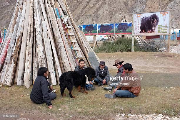 Tibetans discuss about price of a Tibetan Mastiff at a Tibetan Mastiff breeding center in Jiegu Township on October 16, 2011 in Yushu County of...