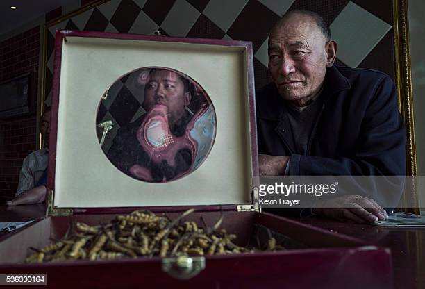 Tibetans display high quality cordycep fungus on May 18 2016 at their shop in Yushu on the Tibetan Plateau in the Yushu Tibetan Autonomous Prefecture...