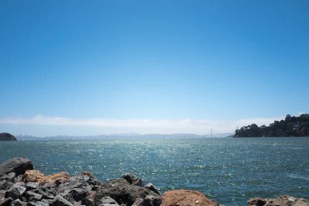 Tiburon Harbor
