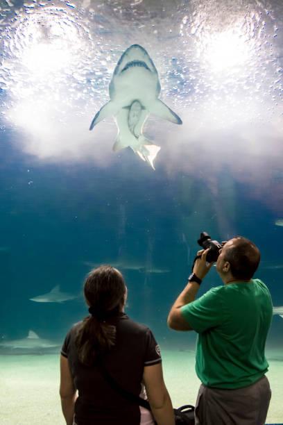 Tiburones (sharks) in Valencia's Aquarium.
