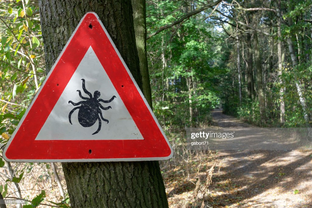 tick insect warning sign in forest : Stock Photo