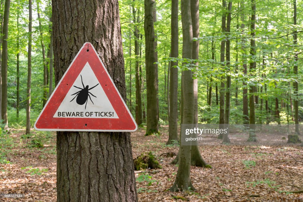 tick insect warning sign : Stock Photo