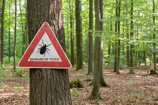 tick insect warning sign 958222134