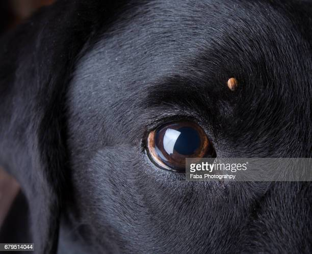 tick on a dog - dog tick stock pictures, royalty-free photos & images
