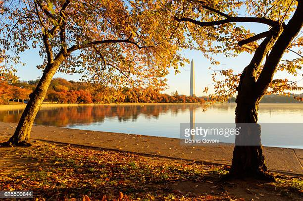 tidal basin during peak fall color - national monument stock pictures, royalty-free photos & images