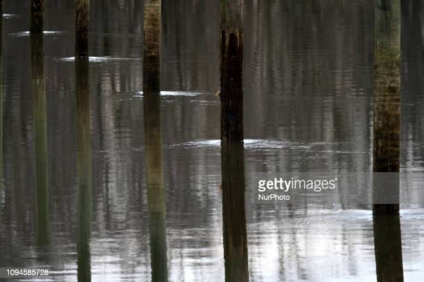 Tidal flow of Neshaminy Creek near the mouth to the Delaware river and Neshaminy State Park Tidal Marsh Natural Area in Bucks County Pennsylvania on...