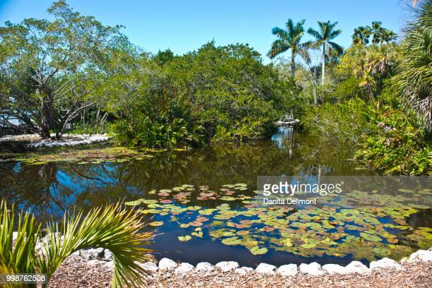 tidal lagoon, selby gardens, sarasota, florida, usa - botanischer garten stock-fotos und bilder