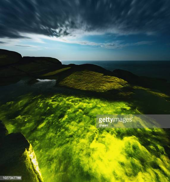 Tidal Pool of Algae