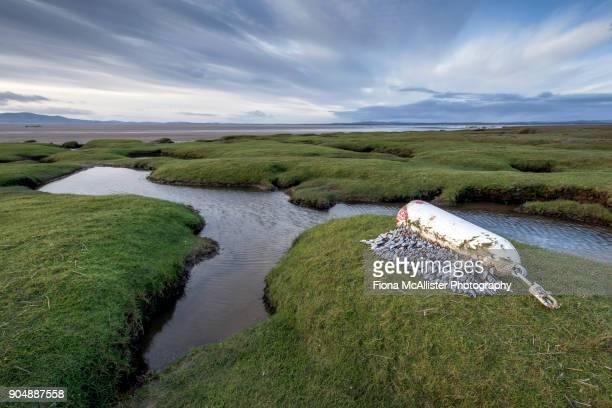 Tidal Salt Marsh, Solway Firth, British Coastline