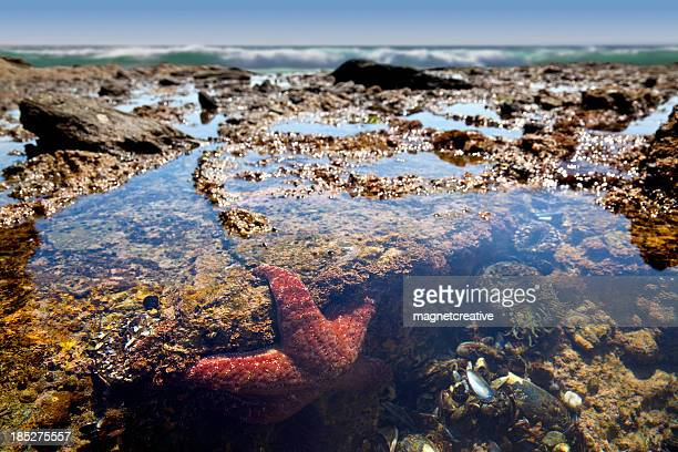 Tide Pool Teeming With Life