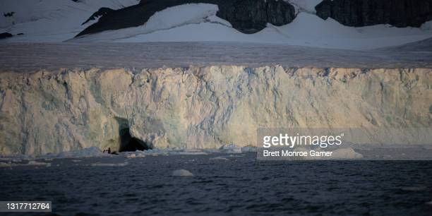 tide water glacier in antarctica - antarctic sound stock pictures, royalty-free photos & images