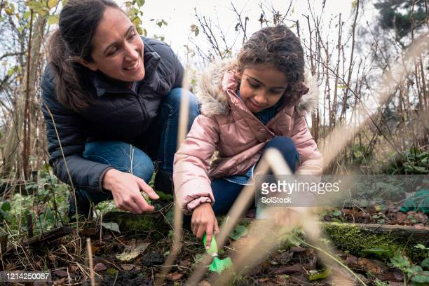 tidying the allotment with mum - real life stock pictures, royalty-free photos & images