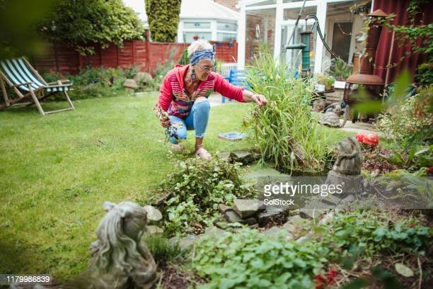 tidying up her pond - pond stock pictures, royalty-free photos & images