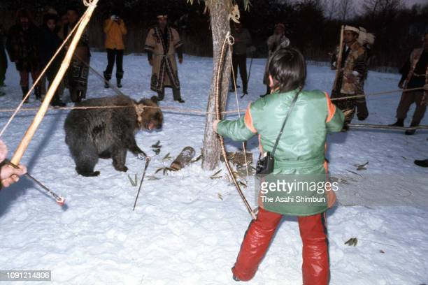 A tied brown bear is shot ceremonial arrows called 'Epereai' to sacrifice during an Ainu ritual 'Iomante' sending off bears on March 4 1977 in...