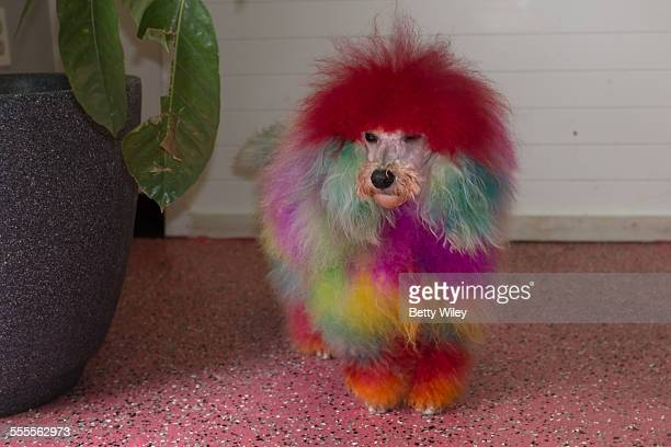 Tie-dyed dog