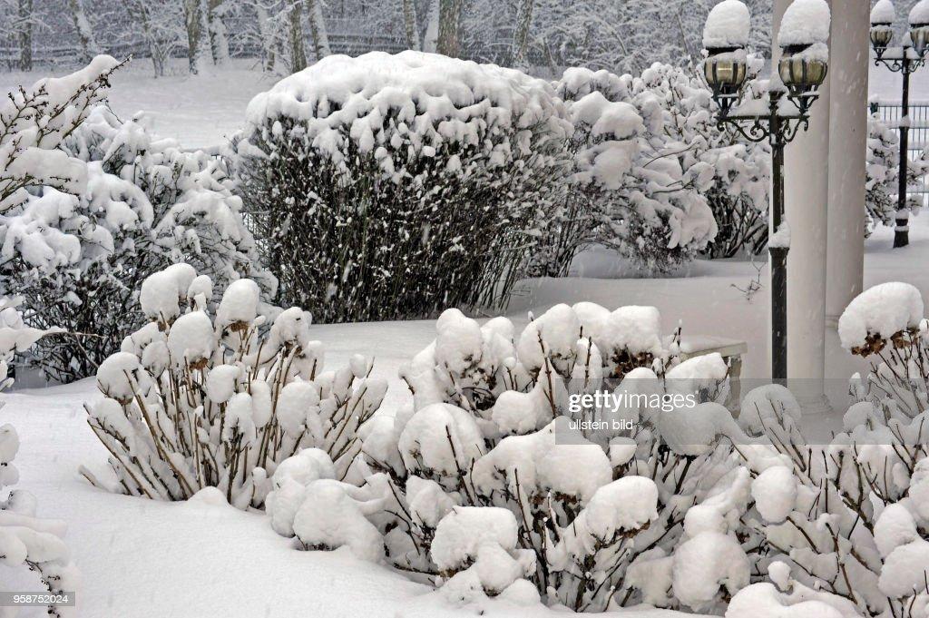 Tief Verschneit Sind Die Stauden Und Gehoelze Im Winterlichen Garten