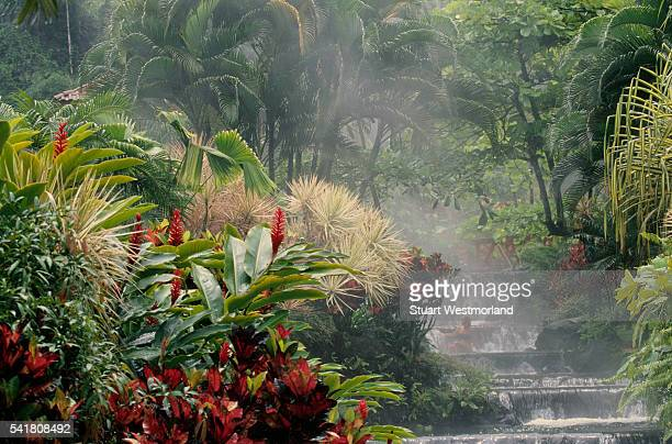 Tiered Waterfalls at Tabacon Hot Springs