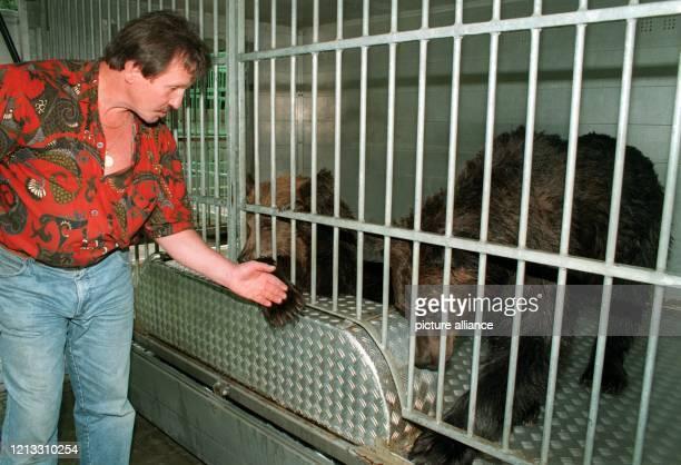 Tierlehrer Dieter Kraml steht am 8.9.1996 im niedersächsischen Alfeld vor einem Käfig mit den beiden Braunbären, die ein Jäger am 8. September bei...
