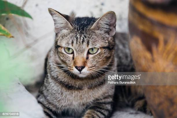 tiger cat lying near the flower pot