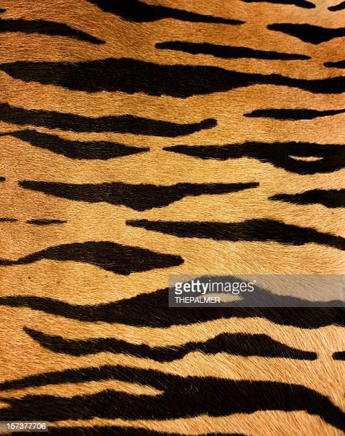 4,362点のトラ柄のストックフォト - Getty Images