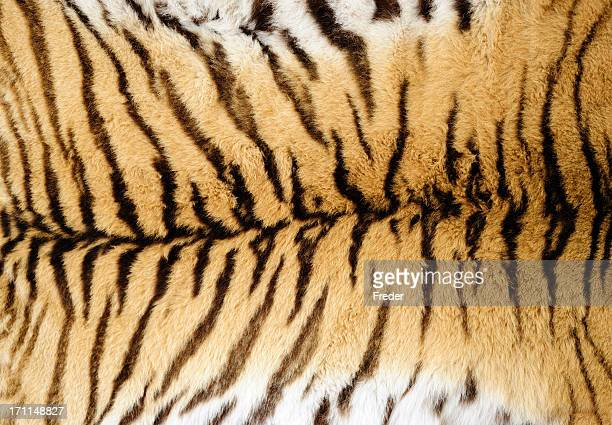 tiger fur - fur stock pictures, royalty-free photos & images