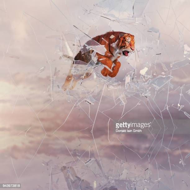 tiger leaping and smashing through glass wall - appearance stock pictures, royalty-free photos & images
