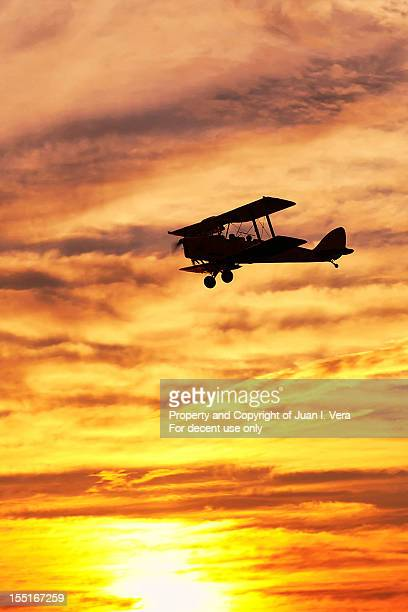 tiger moth at sunset - sunset moth stock photos and pictures