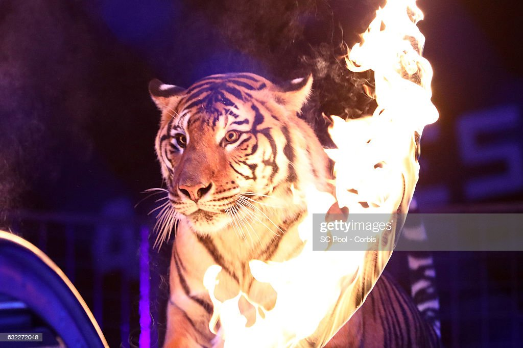 41th International Circus Festival : Day Two In Monaco : News Photo