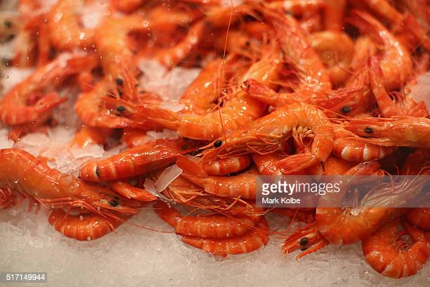 Tiger prawns are seen on sale in the Nicholas Seafood traders store after the Easter auction at the Sydney Fish Market on March 24 2016 in Sydney...
