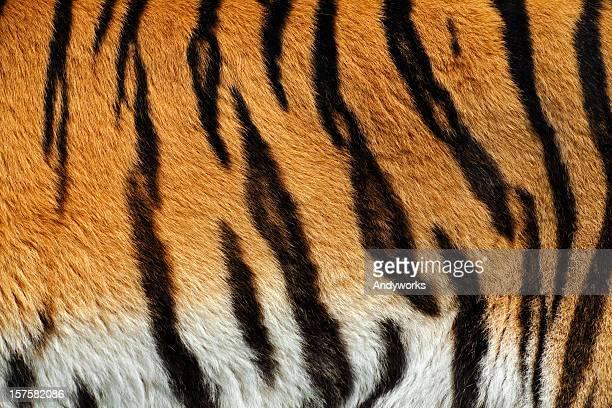 Tigerfell XXXL