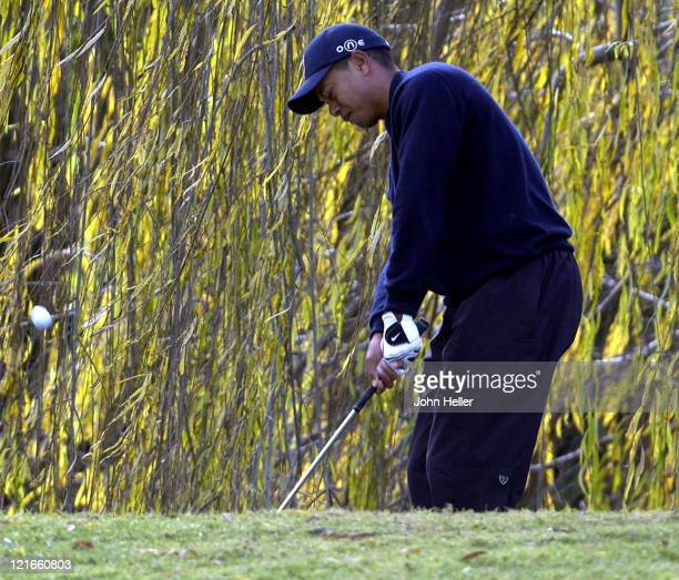 Tiger Woods hits his ball after the drop on the 2nd hole of the 2003 Target World Challenge benefiting the Tiger Woods Foundation