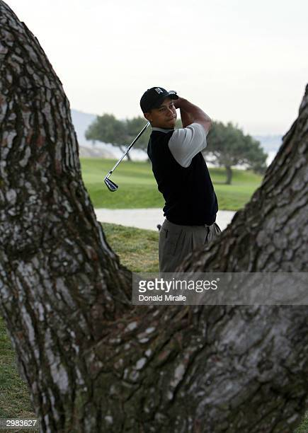 Tiger Woods hits out from behind a tree in the rough on the 4th hole during the 3rd round at the Buick Invitational at Torrey Pines Golf Course on...