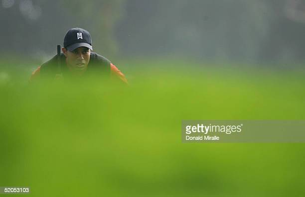 Tiger Woods lines up a putt on the 8th hole in the final round of the Buick Invitational on January 23, 2005 atTorrey Pines Golf Course in La Jolla,...