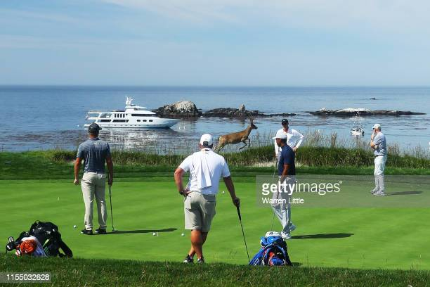 Tiger Woods of the United States, Bryson DeChambeau of the United States and caddies watch as a deer crosses the fourth green during a practice round...