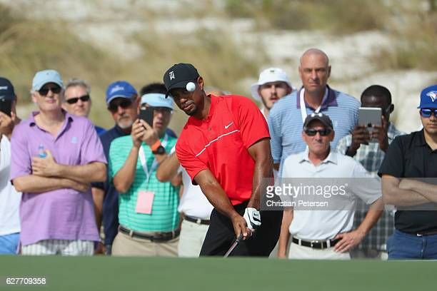 Tiger Woods of the United States chips on to the 11th green during the final round of the Hero World Challenge at Albany The Bahamas on December 4...