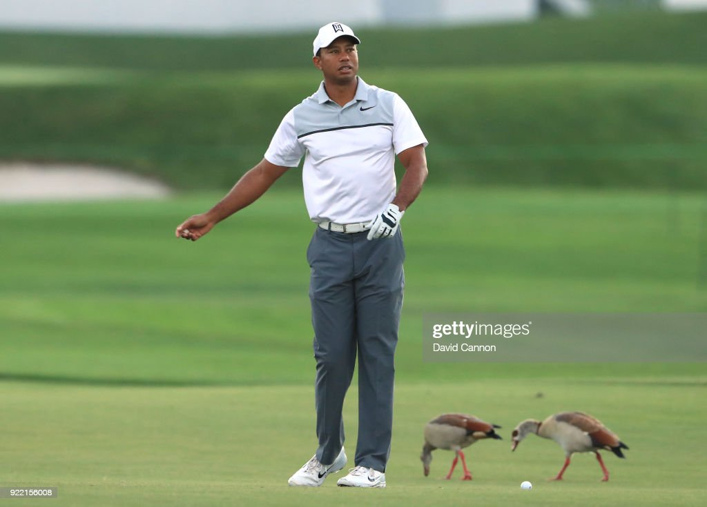 Tiger Woods of the United States waits to play a shot whilst the geese are oblivious to his presence during the pro-am for the 2018 Honda Classic on The Champions Course at PGA National on February 21, 2018 in Palm Beach Gardens, Florida.